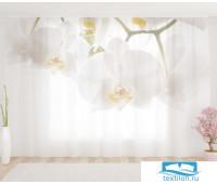 Художественный фототюль 290*260, 1 полотно Белые орхидеи